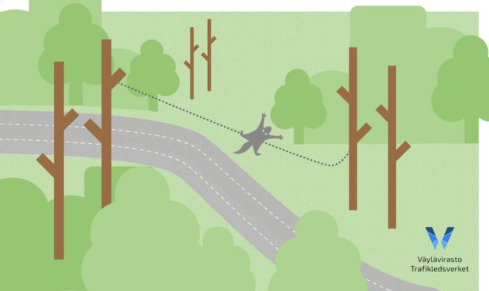 Kuvassa on havainnollistettu liito-oravan ylhäältä alaspäin suuntautuva liidon linjaus.