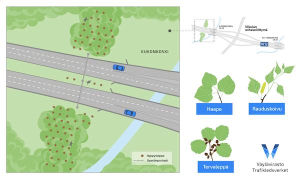 Karttakuvassa on esitetty hyppytolppien sijainnit ja istutettavat puulajit liito-oravien tienylityspaikalla Kukonkoskella.