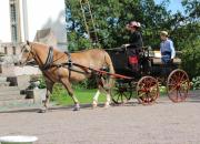 Traditionsåk på Hammarbacken 9.6.2018 kl 11-17