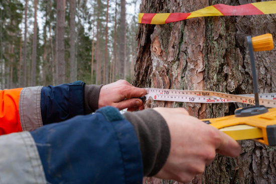fiskars-oyj-abp-metsapaallikko-robert-lindholm-mittaa-puun-halkaisijan.-copyright-elisabeth-blomqvist.jpg