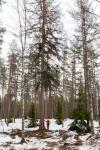 fiskars-oyj-abp-metsapaallikko-robert-lindholm-ja-yksi-tulevista-alamastoista-2.jpg