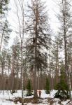 fiskars-oyj-abp-metsapaallikko-robert-lindholm-ja-yksi-tulevista-alamastoista.jpg