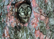 Honka, mänty, petäjä – sitkeys, juhlavuus, tylsyys ja ylevyys samassa puussa