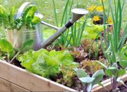 Sikin sokin viljelylaatikossa – vastuullista puutarhanhoitoa