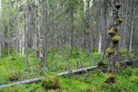 kalliojarven_etelapuoliset_suot_lieksa_pohjois-karjala_harriholtta.jpg