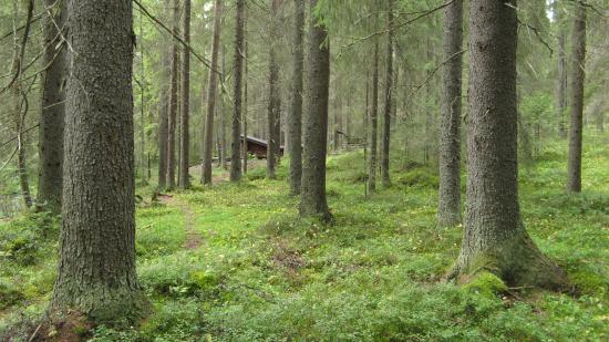 sanginjoki_kalle-hellstro-cc-88m_2014.jpg
