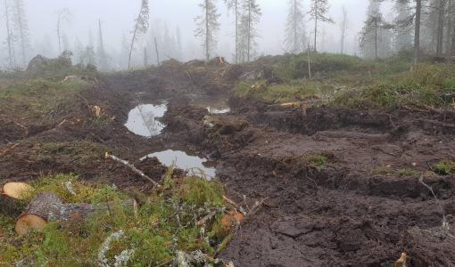 Metsähallituksen hakkuista tutkintapyyntö Kainuussa