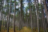 kuvituskuva-metsaa.jpg
