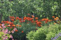 puutarhanne_maisema_pihapiirimessut.jpg