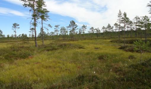 Geopark-luontoretkillä lähiympäristö tutuksi