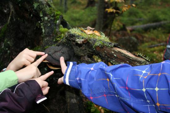 luokasta-luontoon-suomen-latu2.jpg