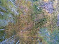 kampanraunio-ilmakuvassa.-kuva-metsahallitus_-kaisa-vainio.jpg