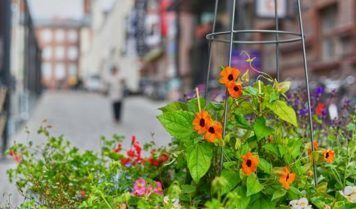 Finlaysonin alueelle ennätysmäärä istutuksia – lähes 1000 kasvia koristamassa miljöötä Kukkaisviikoilla