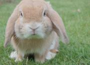 Viikonlopun vetonaulat: kanien estekisat, kaulailtavia karvakavereita ja näyttelyitä
