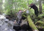 VIRTA-hanke tähtää virtavesien ja taimenkantojen parantamiseen - Oriveden kaupunki mukana