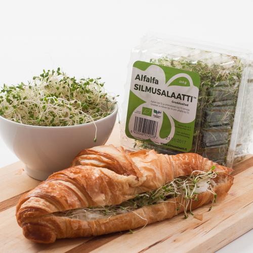 alfalfa-silmusalaatti.jpg