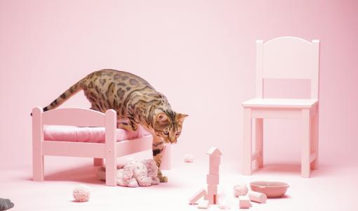 Kissan ruokinta on taitolaji, jonka kanssa moni kissanomistaja kamppailee
