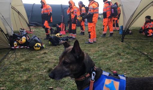 Finn Rescue Team ja sen pelastuskoirat läpäisivät YK:n klassifioinnin Tanskassa - valmiina apuun kansainvälisissä kriisitilanteissa