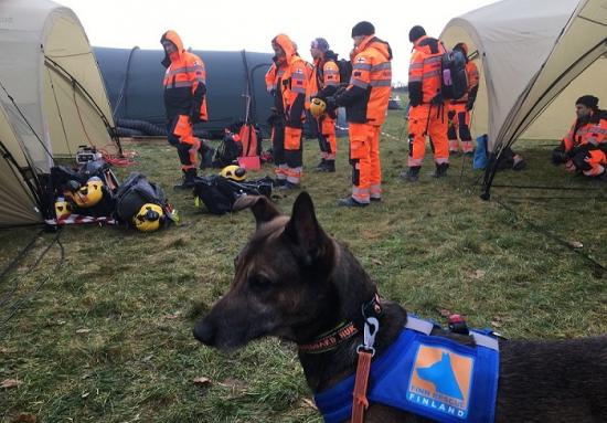 finn_rescue_team_pelastuskoira_1.jpeg