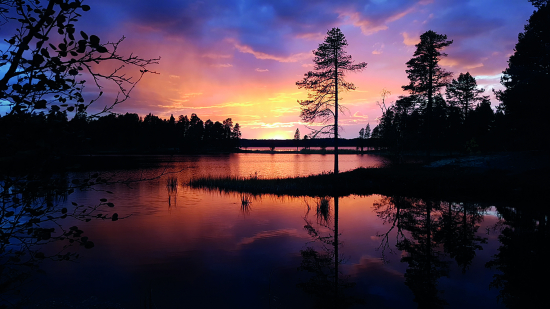 voimakas-poro-ja-kaunis-luonto_auringonlasku_print.jpg