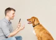 Yli kolmella koiralla neljästä on hammas- tai iensairaus – Näin tunnistat ja ehkäiset koiran suun ongelmia