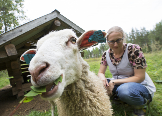 lammas-ja-paimen-pyha-hakin-kansallispuistossa_kuva-tea-karvinen.jpg
