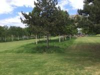 thames-barrier-park-lontoo-puiden-alla-niittyma-cc-88inen-kasvillisuus.jpeg