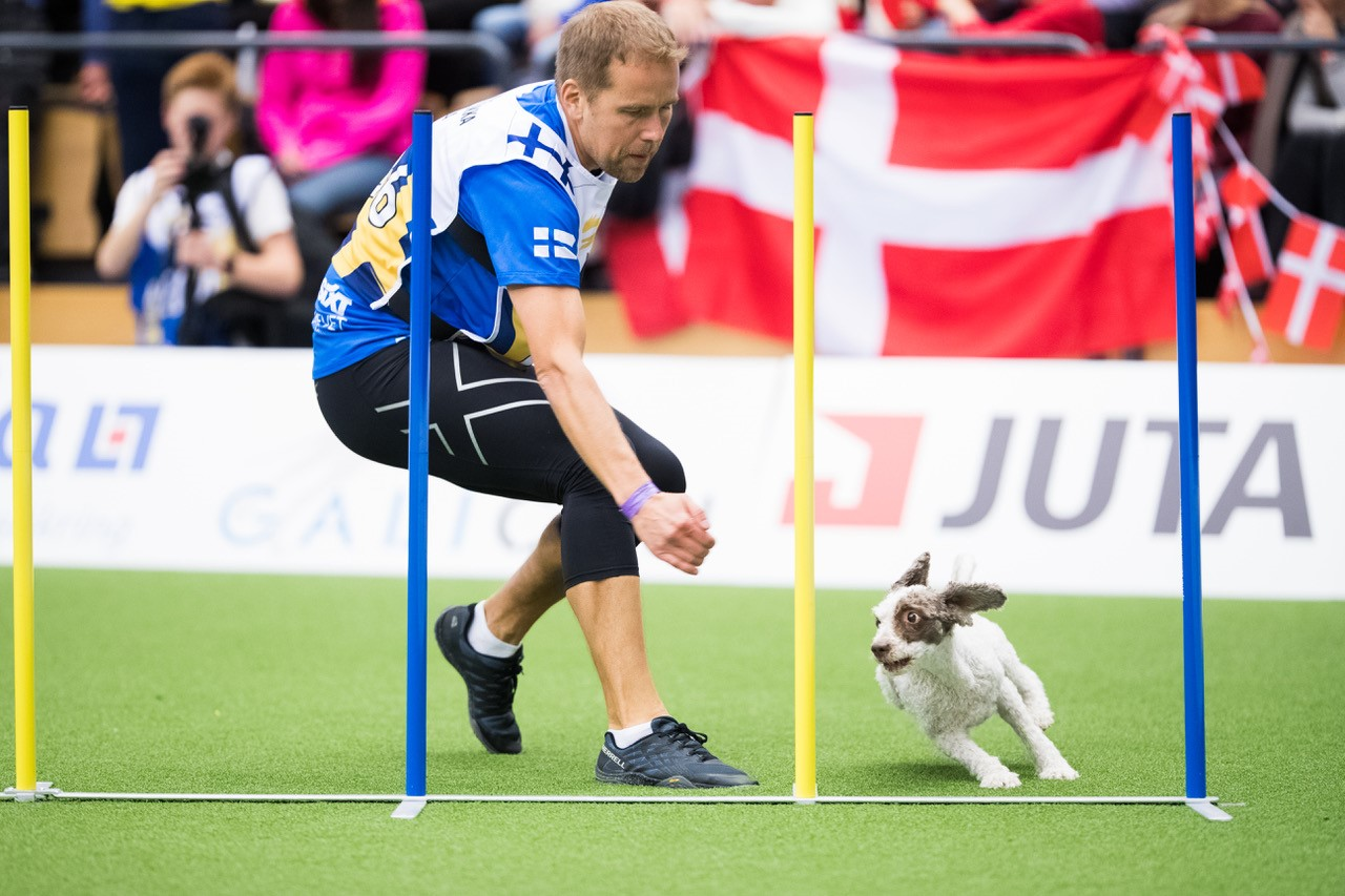 Ville Liukka ja Ronja ovat agilityn Suomen huippuja. Kuva: Suomen Agilityliitto / Jukka Pätynen (koirakuvat.fi)