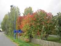 tuusniemi-joensuun-ja-kuopion-keskipisteessa-cc-88.jpg
