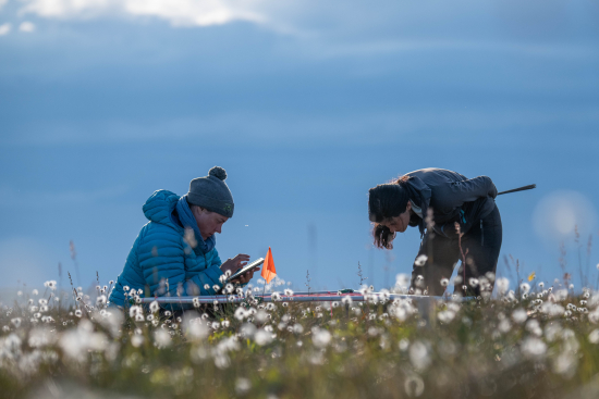 meticulous-on-the-ground-observations-provide-critical-insights-into-how-tundra-vegetation-is-changing_credit_jeffrey-kerby_national-geographic-society.jpg
