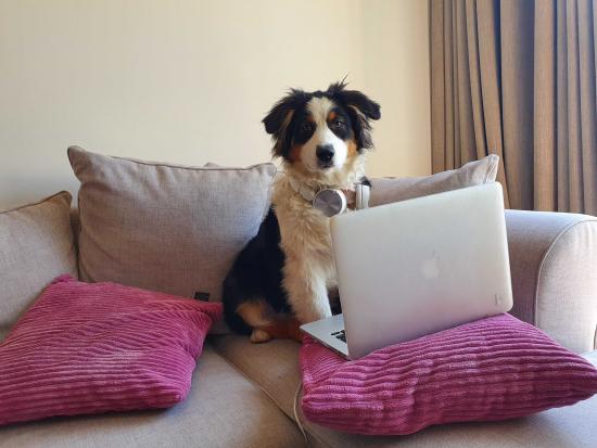 dog_in_belgium_quarantine.jpg