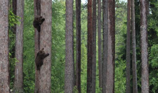 Maailman hauskimmat villieläinvalokuvat hihityttävät jälleen Haltiassa