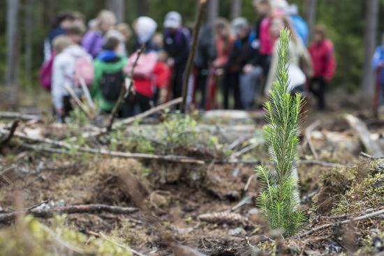 koululaiset-istuttavat-taimia-metsaviikolla.-kuva-vilma-issakainen.jpg