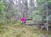 Luontojärjestöt vetoavat Espoon metsänhoitokäytäntöjen muuttamiseksi