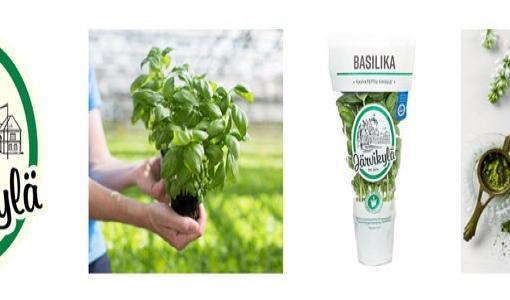 Järvikylän yrtit biohajoaviin ruukkuihin – Tavoitteena täysin muovittomat pakkaukset