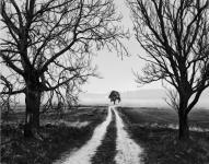 rosendal-kovalainen.jpg