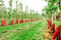omenapuut-1.jpg