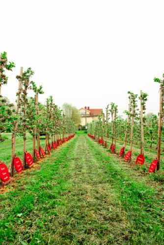 omenapuut.jpg
