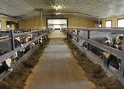 Landsbygdens innovationsgrupper gör digital intelligens tillgänglig för djurgårdar