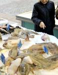 kalakauppa.jpg