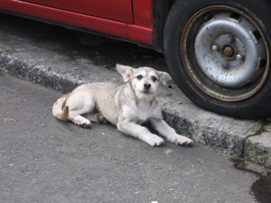 kuvituskuva-koira.jpg.jpg