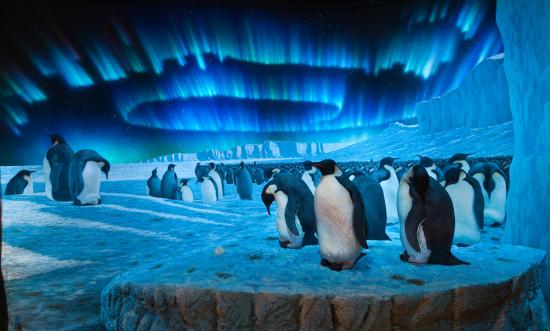 emperor-penguin-diorama.jpg