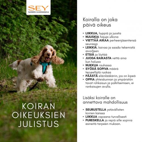 koirakampanja_oikeuksien_julistus.png