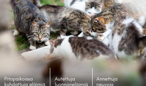 Tuhannet eläimet saivat apua – SEYn vapaaehtoiset eläinsuojeluneuvojat auttavat matalalla kynnyksellä