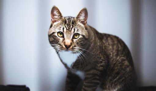 SEY: Suomessa on kissakriisi – avun tarpeessa vuosittain vähintään 20 000 kissaa