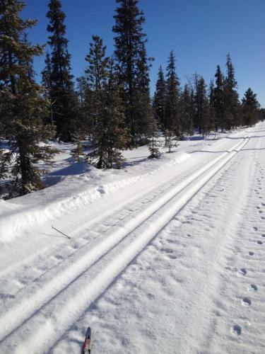 lapponia-hiihto.png