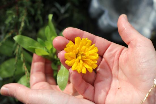 kukka.jpg