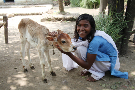 vuohia-lahjoitetaan-perheille-intiassa-ja-sri-lankassa.-kuvaaja-minna-annola.jpg