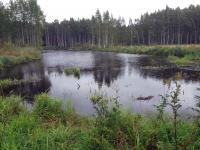 sammalsillansuon-vesiensuojelukosteikko-elokuu-2016.jpg