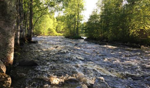 Vuoden lähikalastuspaikka on Viinikanjoki Parkanossa